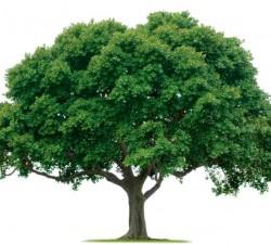 Articole evergreen