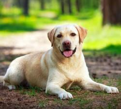 Igiena animalelor si aparat radiologie veterinara FanVet